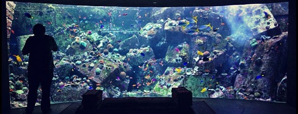 The Lost Chambers Aquarium is one of Dubai.
