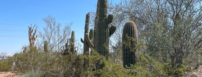 Plants & People of the Sonoran Desert Loop Trail is one of PHX.