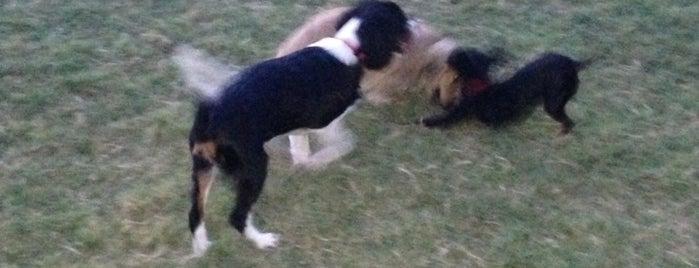 Rockwall Area Dog Park is one of Posti che sono piaciuti a Jim.