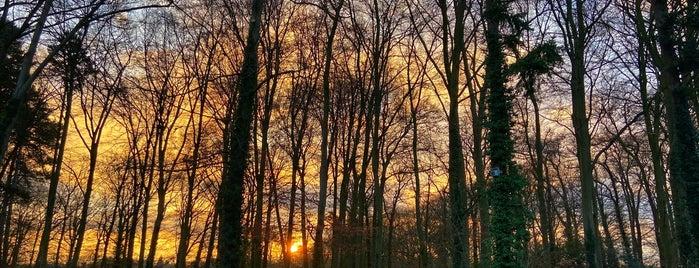Het Hulsbeek is one of Lugares favoritos de Bram.