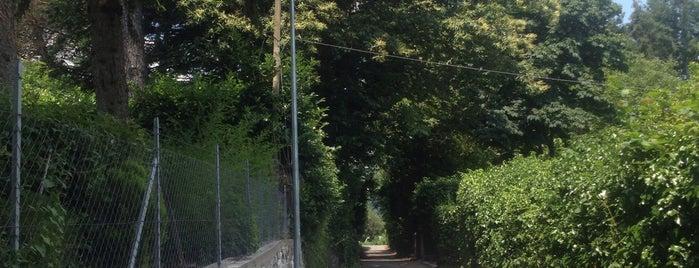 Belvedere Nemi is one of Orte, die Can gefallen.
