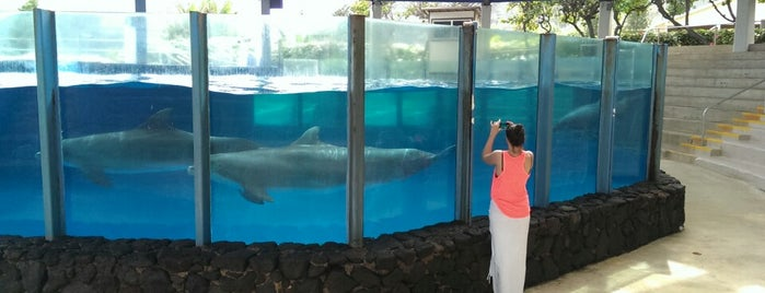 Sea Life Park Dolphin Cove is one of I  2 TRAVEL!! The PACIFIC COAST✈.