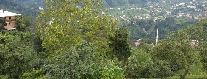 Cufaruksa is one of สถานที่ที่ Mustafa Fazıl ถูกใจ.