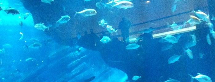 Dubai Aquarium is one of #myhints4Dubai.