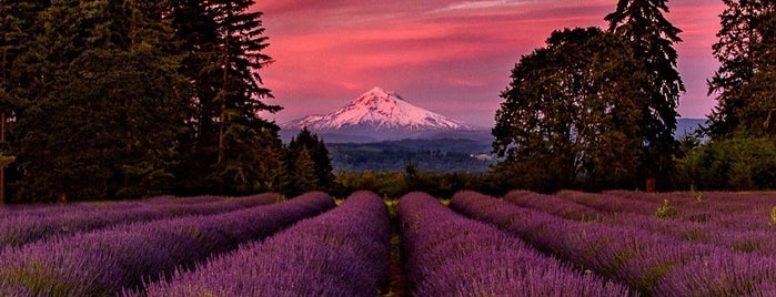 Oregon Lavender Farm is one of Portland/Oregon.