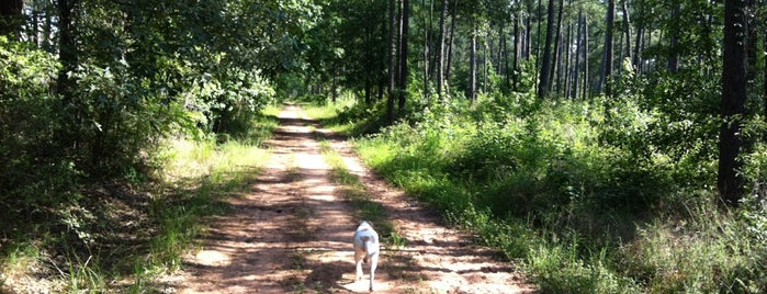 W G Jones State Forest is one of eva's Liked Places.