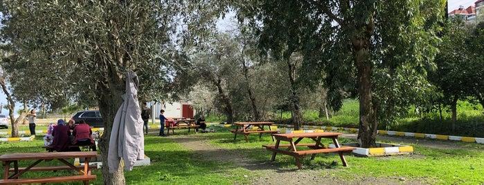 Mersin Plajı Mesire Alanı is one of Trabzon'da Piknik Alanları.