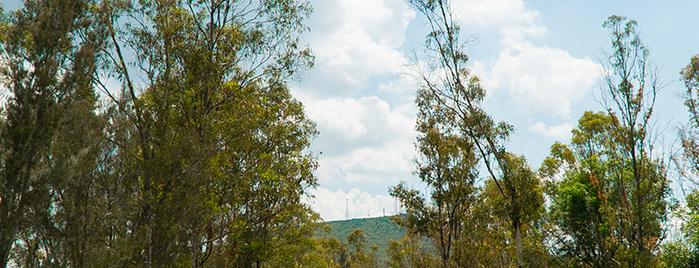 Parque Nacional El Cimatario is one of Diversión y Niños.