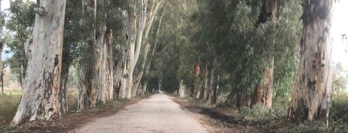 Akçapınar Akyaka Eski Yol(Ağaçlı Yol) is one of Elif'in Beğendiği Mekanlar.