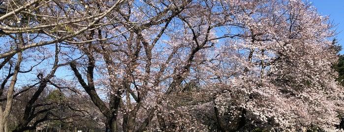 砧公園ランニングコース is one of HIDEKIN♪: сохраненные места.