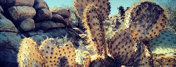 Joshua Tree National Park is one of desert holiday.