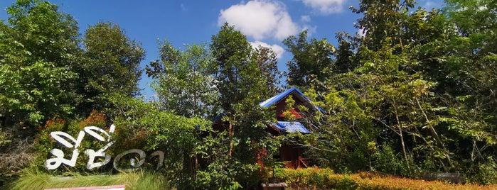 สวนมีชีวา is one of อุบลราชธานี - 2.