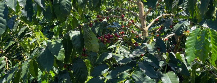 Bayview Coffee is one of My favorites for Farms.