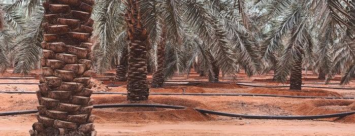 Al Qassim Region is one of duplicate cities, states, ....etc.