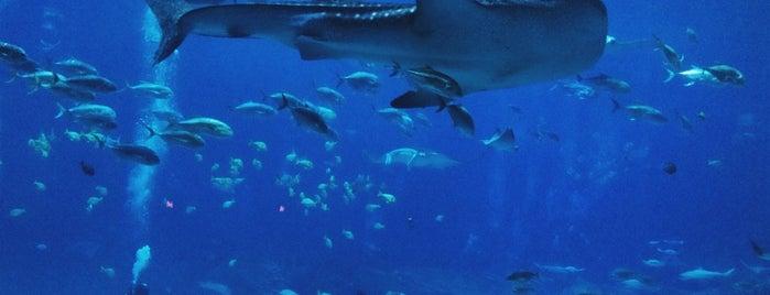 Georgia Aquarium is one of Summer Fun For The Family.