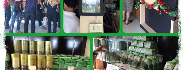 Choui Fong Tea Plantation is one of 🍹Tückÿ♛Vïvä🍹 : понравившиеся места.