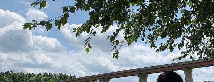 Douglas Dam Tailwater Area is one of Jan 님이 좋아한 장소.