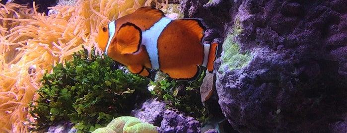 Shedd Aquarium is one of Aquariums of the US.