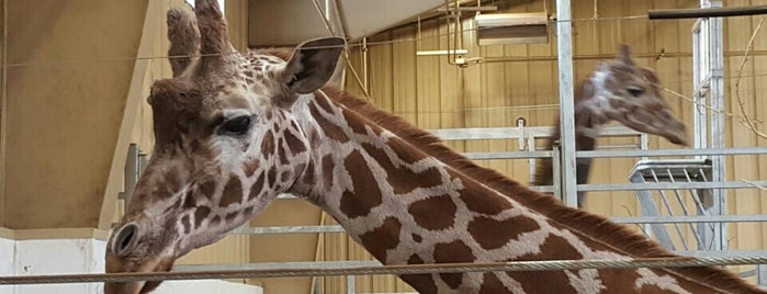 Henry Doorly Zoo and Aquarium is one of Hang With Baby Giraffes and Giant Pandas.
