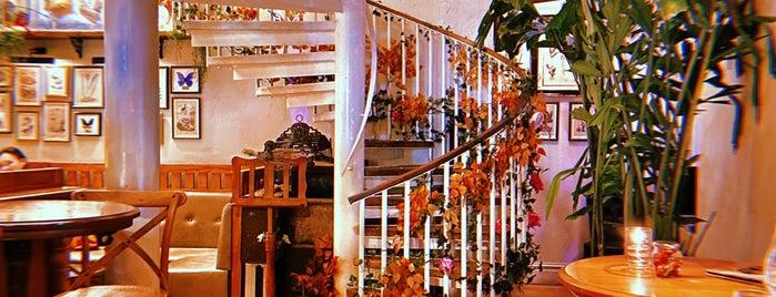 Mr Fogg's House of Botanicals is one of uwishunu london.