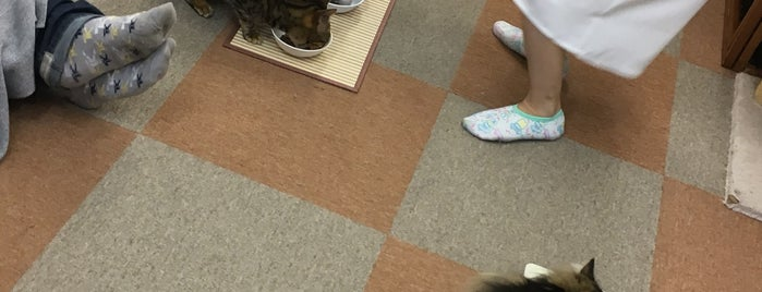cat cafe にゃんこと is one of Find My Tokyo.