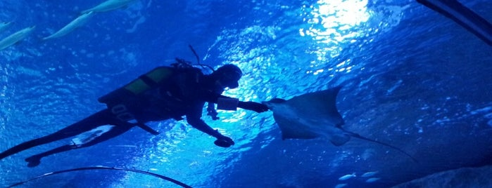 Antalya Aquarium is one of Orte, die Ömer gefallen.