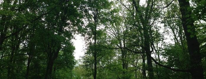 Grafenberger Wald is one of Tempat yang Disukai Cristina.