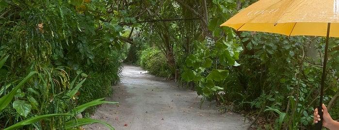 Coco Bodu Hithi is one of Lugares guardados de Soly.