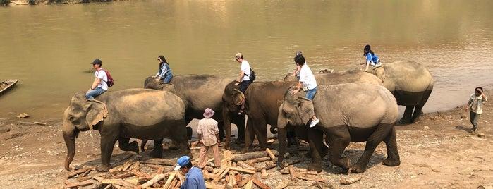 Elephant Village is one of Lauren : понравившиеся места.