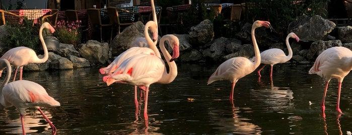 Flamingo Köy is one of Özgül: сохраненные места.