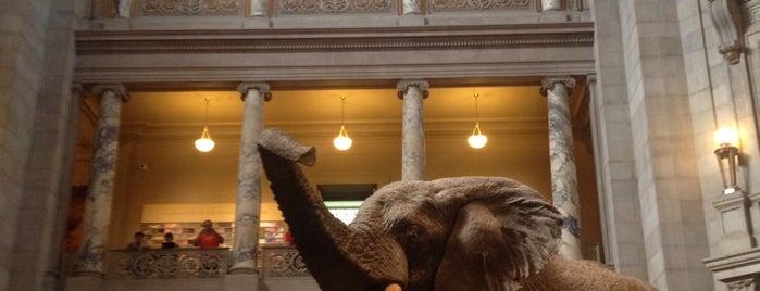 国立アメリカ歴史博物館 is one of Trips / Washington, DC.