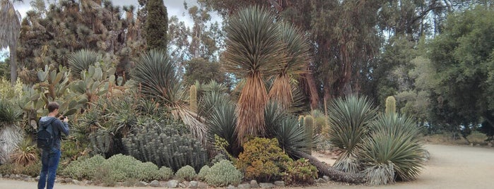 Arizona Cactus Garden is one of Bay Area Exploration Ideas.