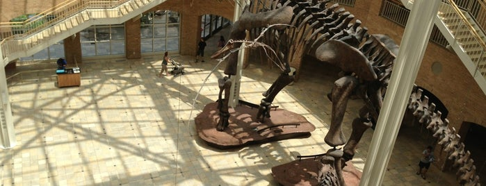Fernbank Museum of Natural History is one of Best places to see dinosaurs.