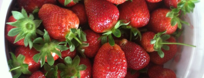 Wegmeyer Strawberry Farm is one of Tanya: сохраненные места.