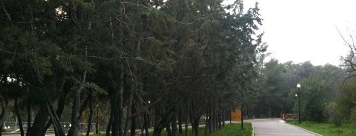 Άλσος Παπάγου is one of places...