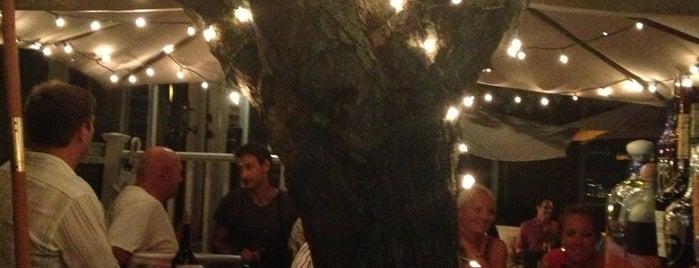 Tree Bar Is One Of Nantucket