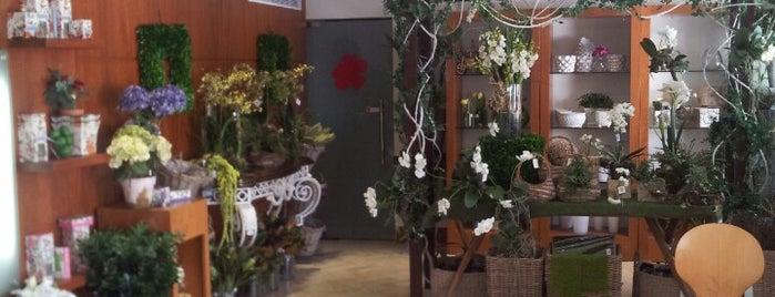 De Flora Floristería y Decoración is one of Tempat yang Disimpan Zen.