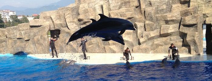 Dolphinarium | დელფინარიუმი is one of Natalja : понравившиеся места.