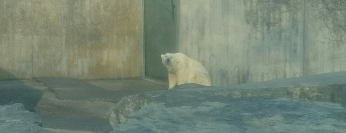 Zoo Schreiter is one of สถานที่ที่ Miguel ถูกใจ.