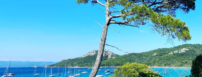 Porquerolles is one of COTE D'AZUR AND LIGURIA THINGS TO DO.