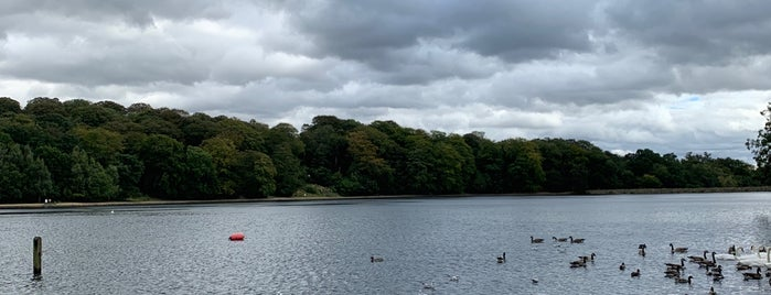 Roundhay Park Lake is one of Bhavaniさんのお気に入りスポット.