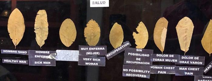 Museo de la Coca is one of Natalia 님이 저장한 장소.