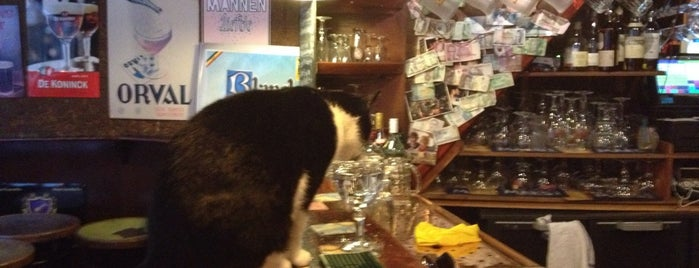 Café Gollem is one of Amsterdam bars with a cat.