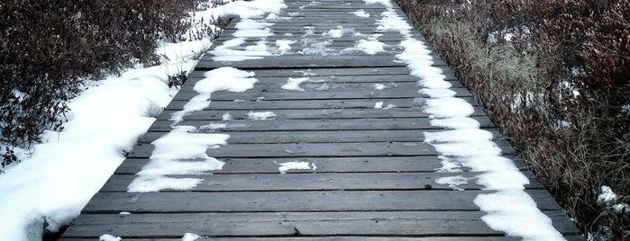 Mer Bleue Bog Boardwalk is one of สถานที่ที่บันทึกไว้ของ Katya.