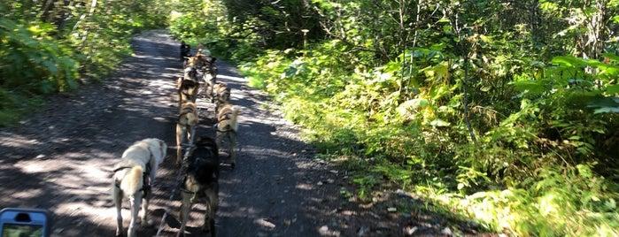 Seavey's Iditarod Dog Sledding is one of Alaska.