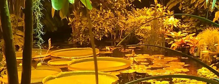 Оранжерея «Средиземноморские растения» is one of Locais salvos de Galina.