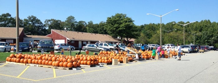 Virginia Beach Farmer's Market is one of Lieux sauvegardés par Erin.