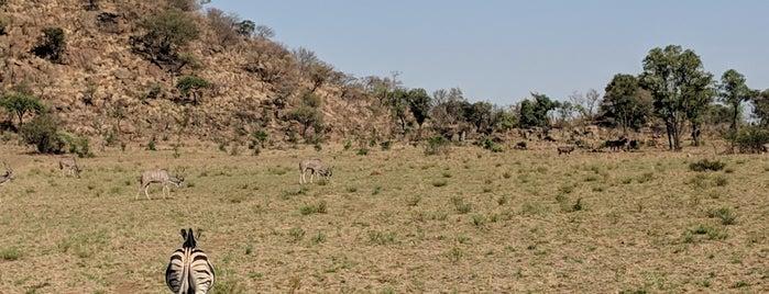 Pilanesberg Game Reserve is one of Tempat yang Disukai Darwich.