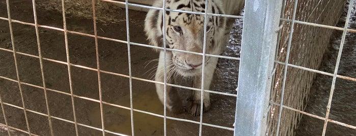G.W. Exotic Animal Park is one of Lieux sauvegardés par Matt.