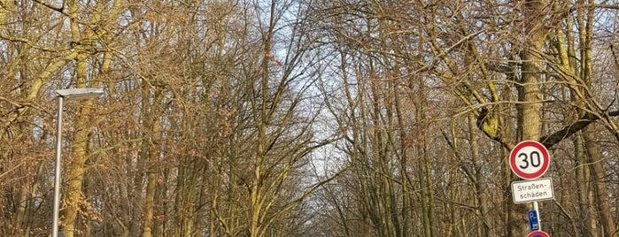H Niemannsweg is one of KVG Linie 51.